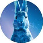 @o2music's profile picture