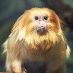 @binghamtonzoo's profile picture on influence.co