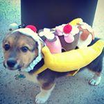 @nike_the_corgi's profile picture on influence.co