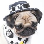 @barry_the_puggy's profile picture on influence.co