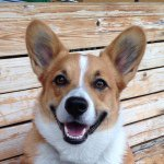 @mortythecorgi's profile picture on influence.co