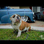 @1931_1948chevrolet's profile picture on influence.co