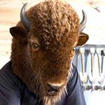 @visitbuffaloniagara's profile picture