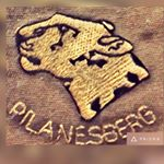 @pilanesberg_'s profile picture on influence.co