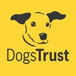 @dogstrust's profile picture
