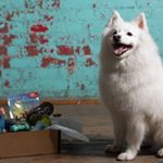 @petpackco's profile picture