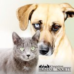 @kingstonhumanesociety's profile picture on influence.co