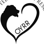 @oldyellerranchrescue's profile picture on influence.co