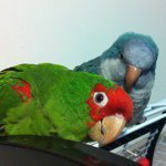 @birdsplz's profile picture on influence.co