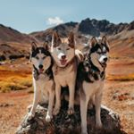 @exploringwithhuskies's profile picture on influence.co