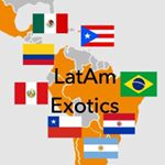 @latamexotics's profile picture on influence.co