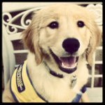 @ccicanine's profile picture on influence.co