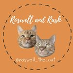 @roswell_the_cat's profile picture on influence.co