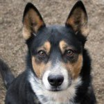 @hamiltoncounty.humanesociety's profile picture on influence.co