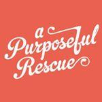 @apurposefulrescue's profile picture on influence.co