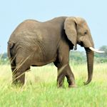 @96elephants's profile picture on influence.co