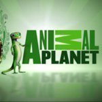 @animalplanet_wild's profile picture on influence.co