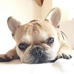 @cesar_frenchie's profile picture