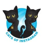 @catsofinstagram's profile picture