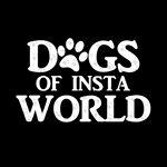@dogsofinstaworld's profile picture