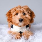 @kenziethecavapoo's profile picture on influence.co