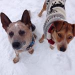 @rebeltheheeler's profile picture on influence.co