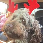 @servicedogjetta's profile picture on influence.co