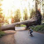 @longboard.nature's profile picture