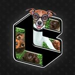 @lootpets's profile picture