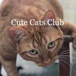 @cutecatsclub's profile picture on influence.co