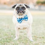 @curlytailties's profile picture on influence.co