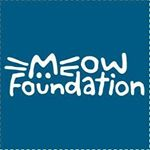 @meowfoundation's profile picture on influence.co