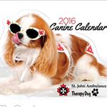 @sjatorontotherapydogs's profile picture on influence.co