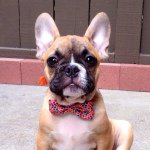 @brixthefrenchie's profile picture on influence.co