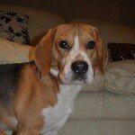@beagleblacky's profile picture on influence.co