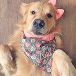 @lola_the_golden's profile picture on influence.co
