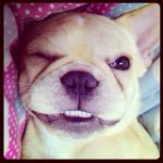 @chloe_is_frenchie's profile picture on influence.co