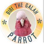 @bibi_the_galah_parrot's profile picture on influence.co