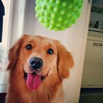 @sally_goldenretriever's profile picture on influence.co