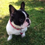 @leah_thefrenchie's profile picture on influence.co