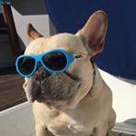 @bosunthefrenchie's profile picture
