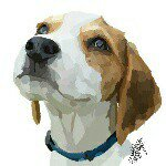 @copper_thebeagle_'s profile picture on influence.co