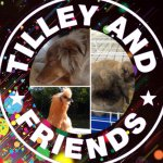 @tilley_and_friends's profile picture on influence.co