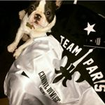 @paris_the_frenchie14's profile picture on influence.co