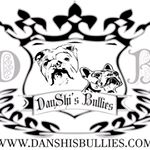 @danshisbullies's profile picture on influence.co