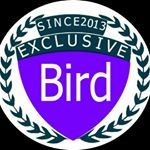 @exclusive_bird's profile picture on influence.co