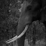 @march4elephantssf's profile picture on influence.co