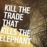 @killthetrade's profile picture on influence.co