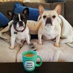 @wilbur_the_realfrenchie_'s profile picture on influence.co