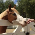 @horserescuemovie's profile picture on influence.co